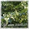 Bild von Lindenblüten Honig 500g