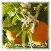 Bild von Orangenblüten Honig 500g