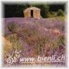 Bild von Lavendel Honig AKTION 3 x 500g